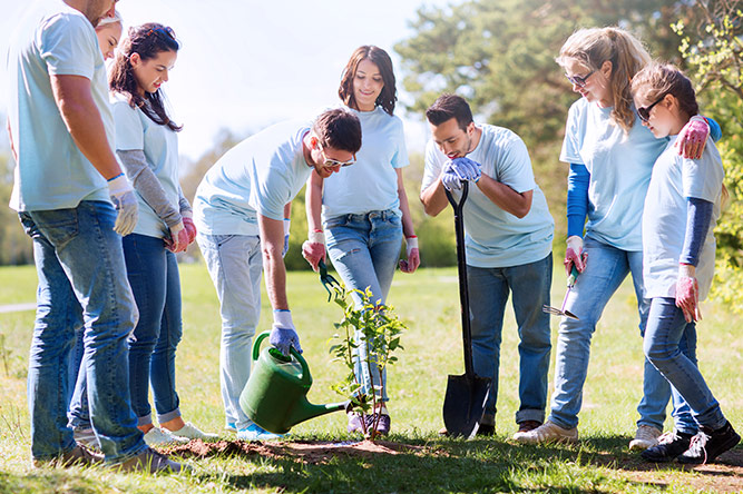 Group of people planting trees together